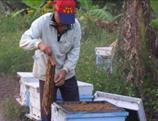 社社區家長示範採蜂方法