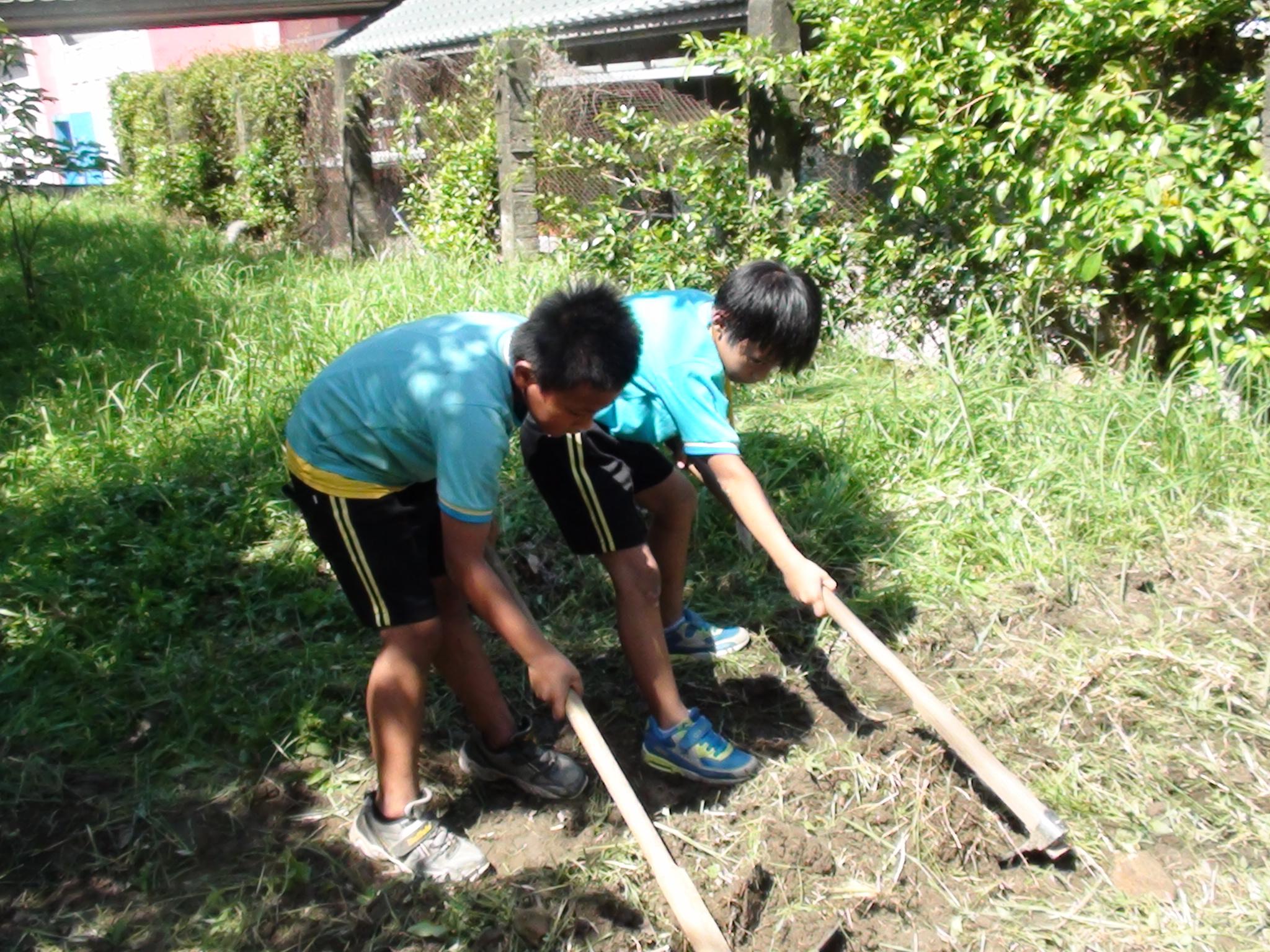 體驗玉米種植